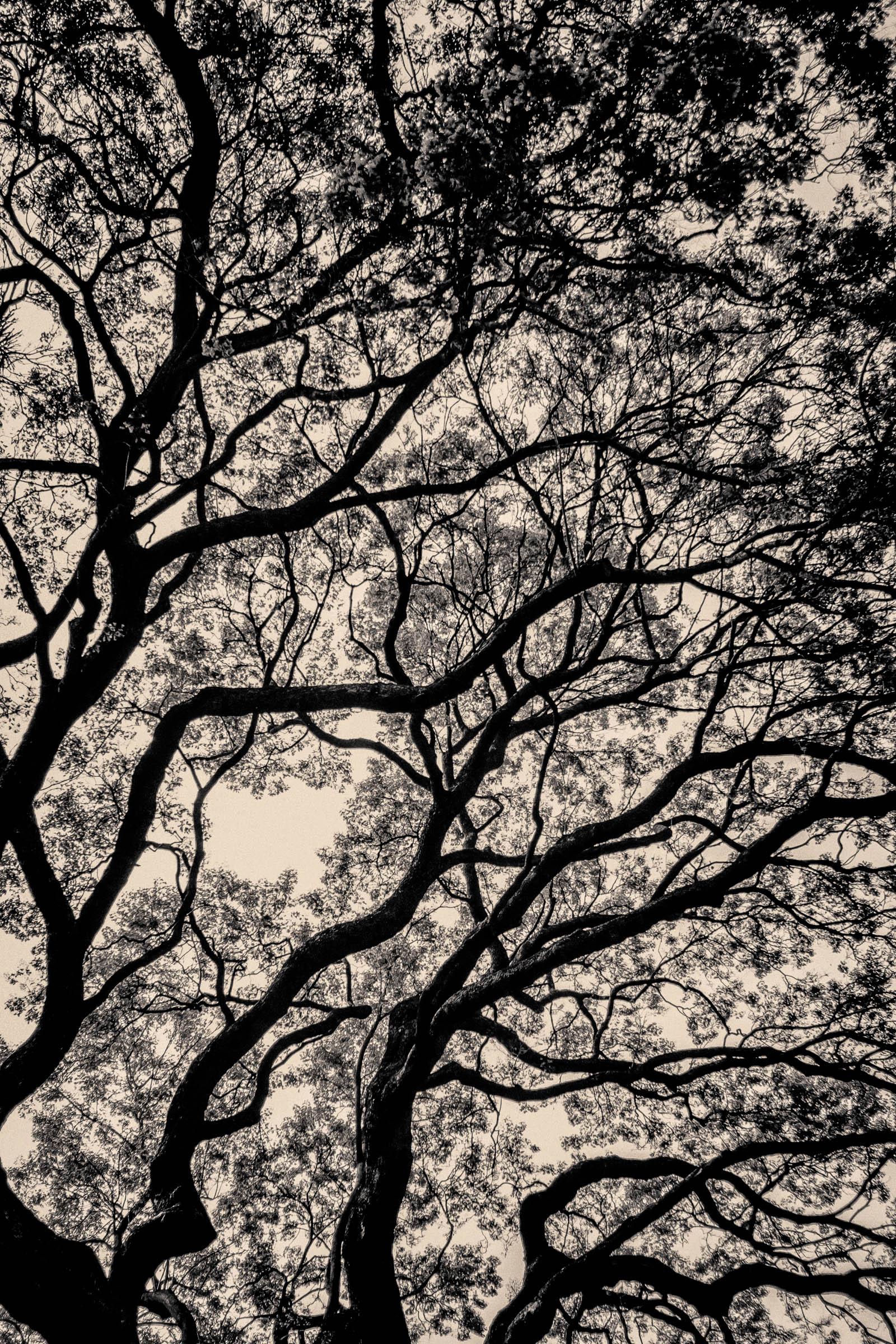 Zimbabwean tree