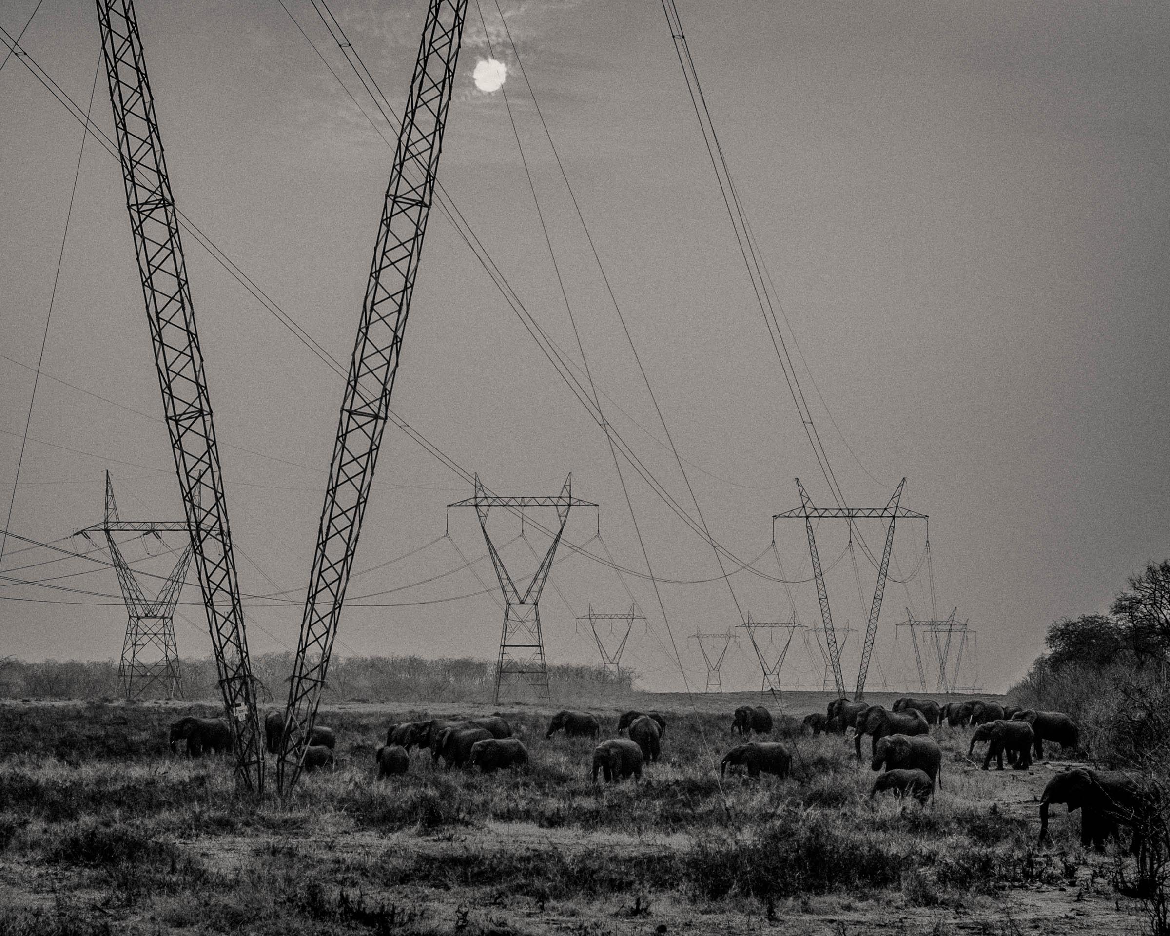 zimbabwean electric elephants