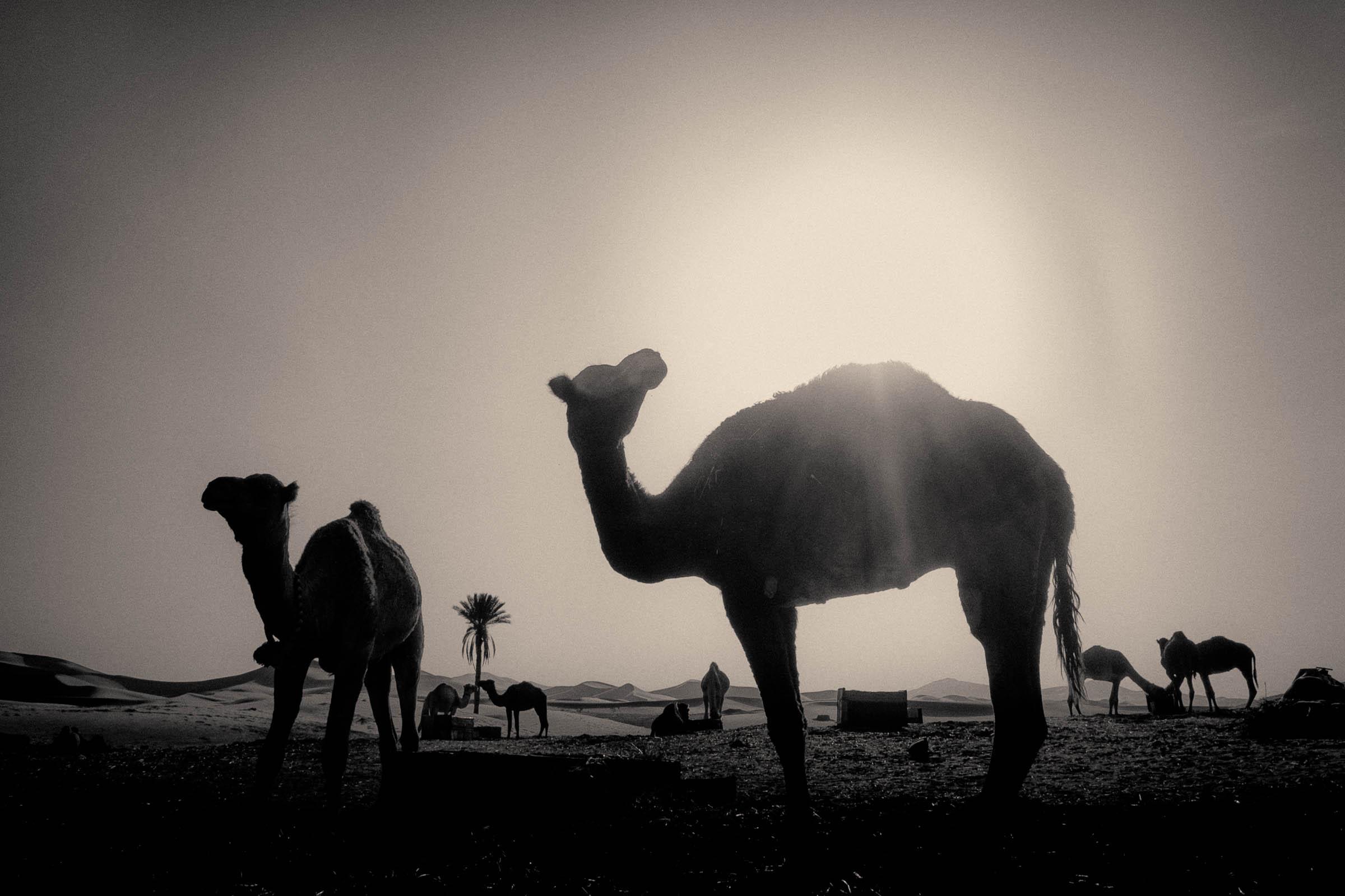 ships of the marrocan desert