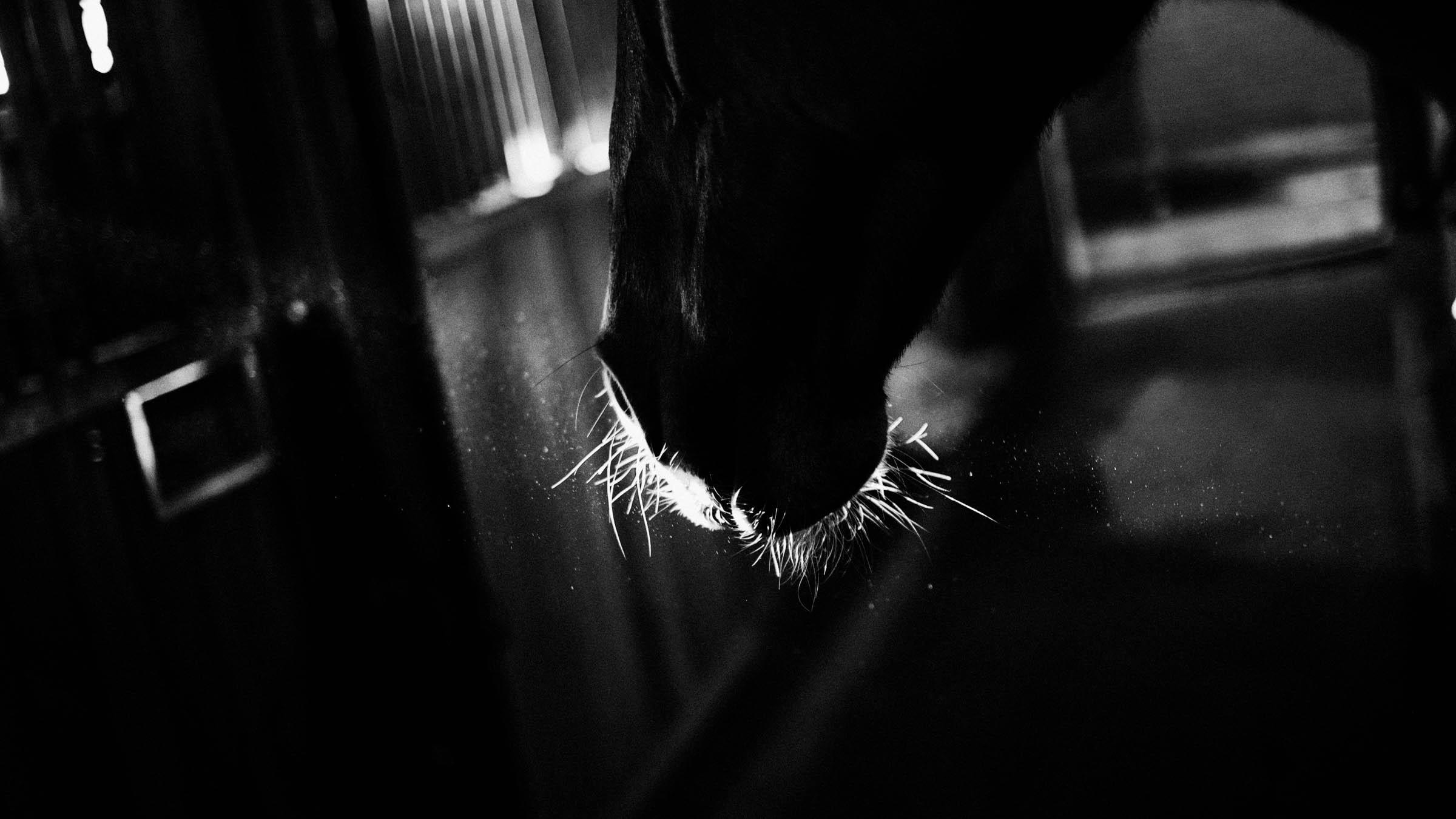 batavian pony