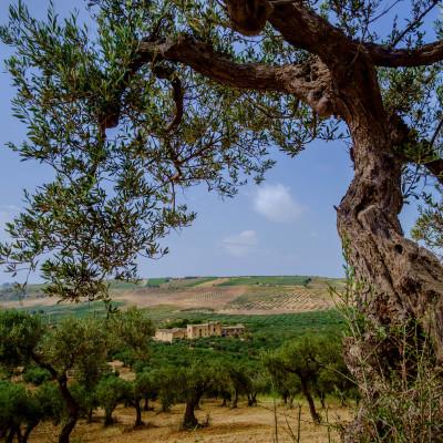 Sicilia in Colour