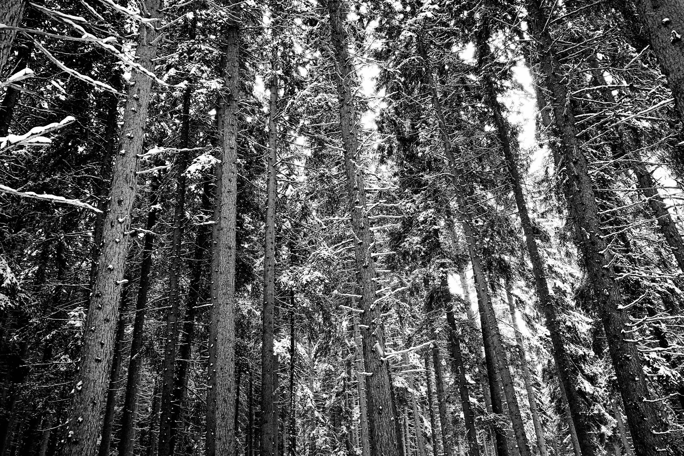 Swiss woods
